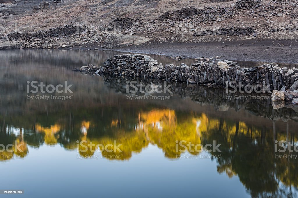 Forest reflected in the water stock photo