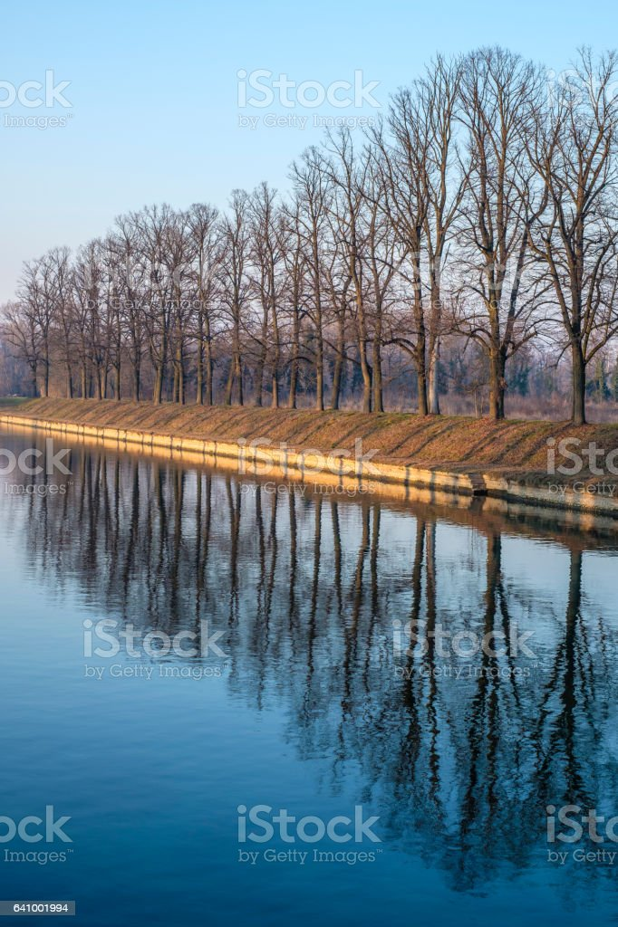 forest reflected in water stock photo