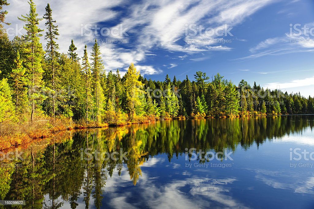 Forest reflecting in lake royalty-free stock photo