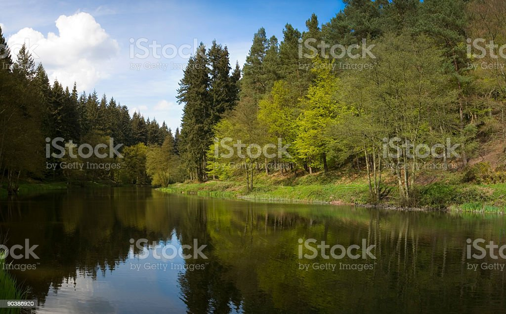 Forest reflection stock photo