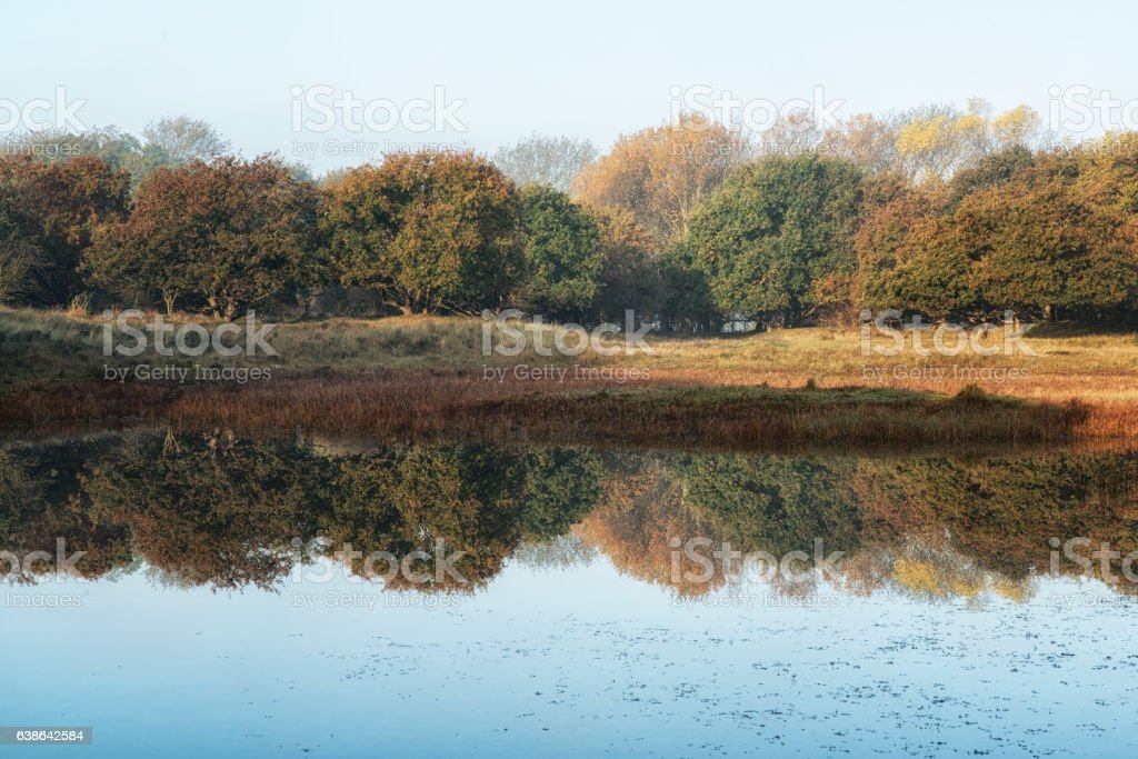 Forest Reflections stock photo