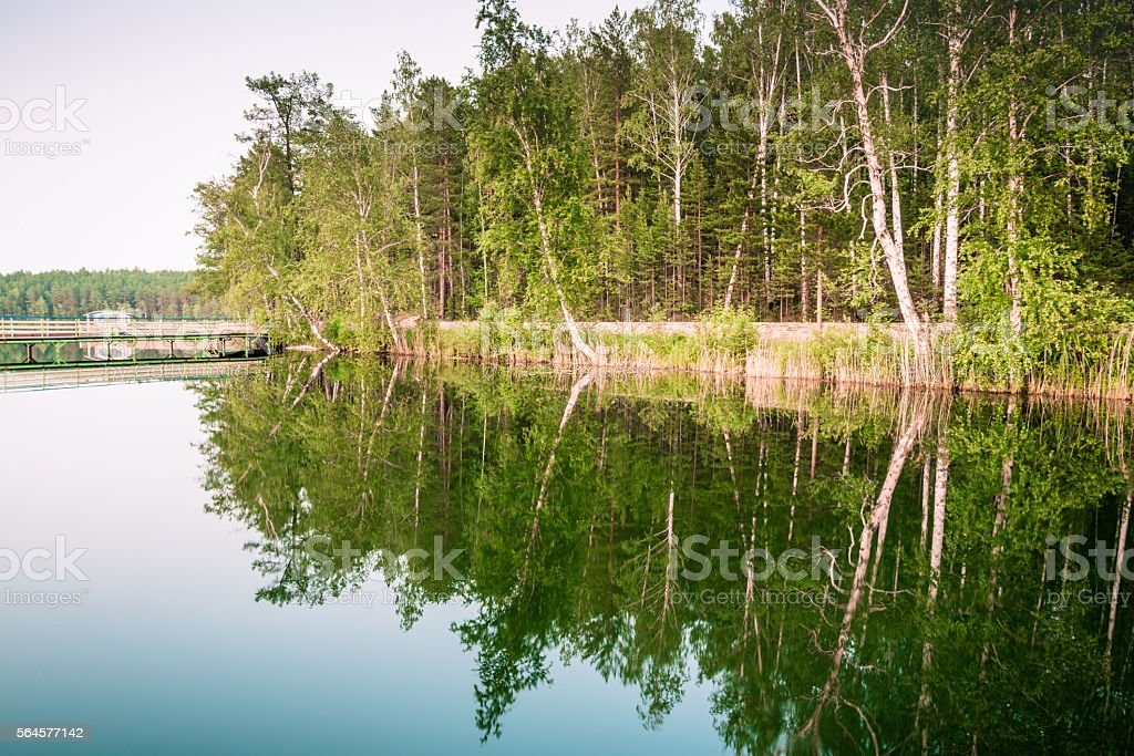 Forest reflextion in a lake water stock photo