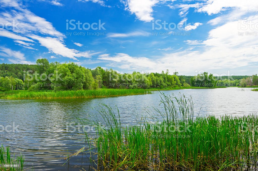 Forest river at summer day stock photo