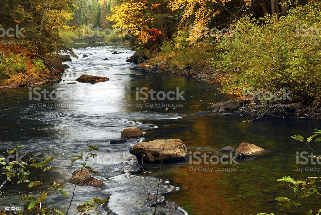 Forest river in the fall stock photo