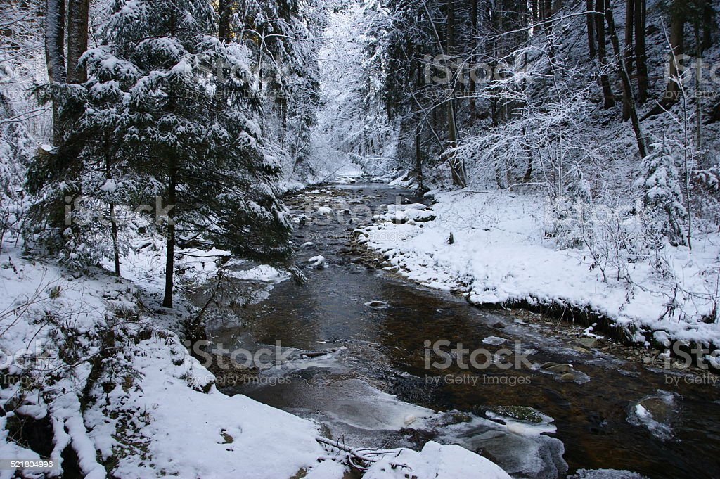 Forest river in winter stock photo