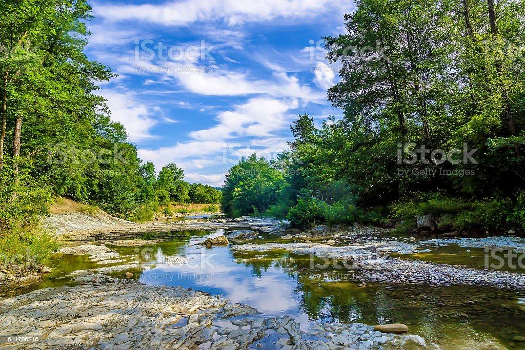Forest river landscape stock photo