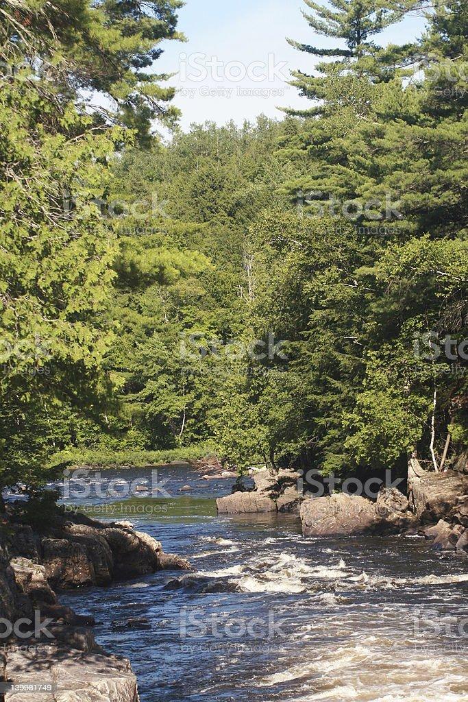 Forest river photo libre de droits