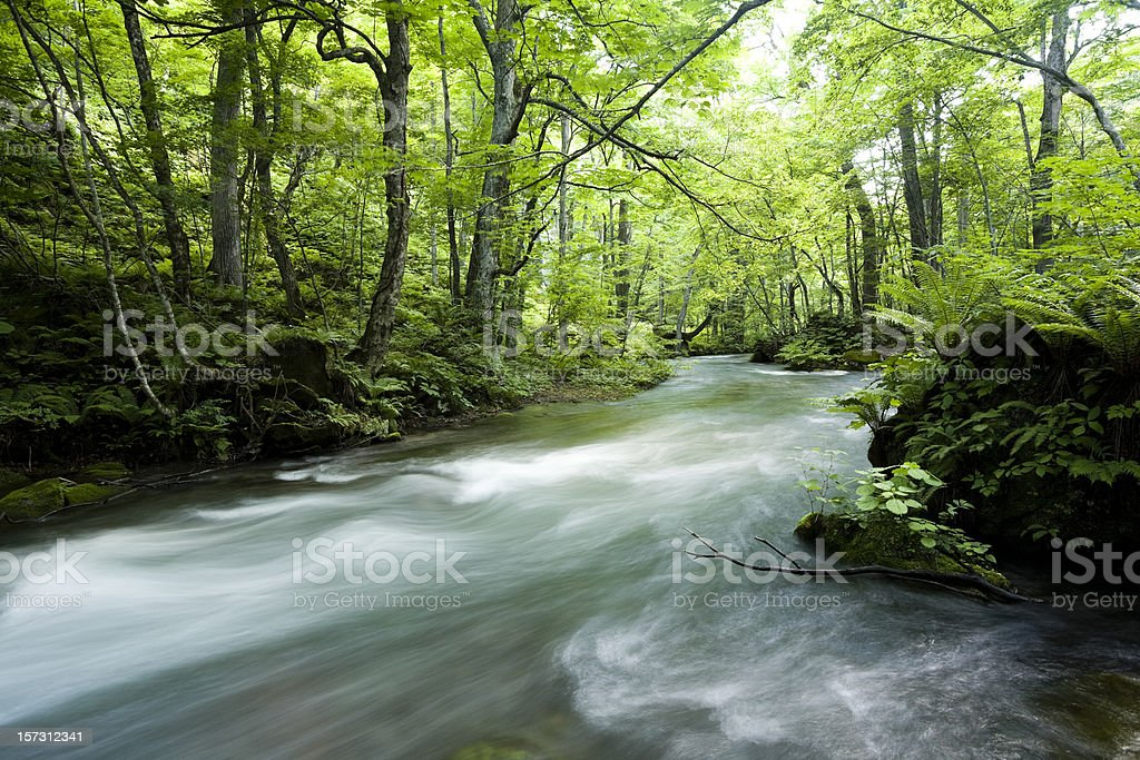 Forest river stock photo