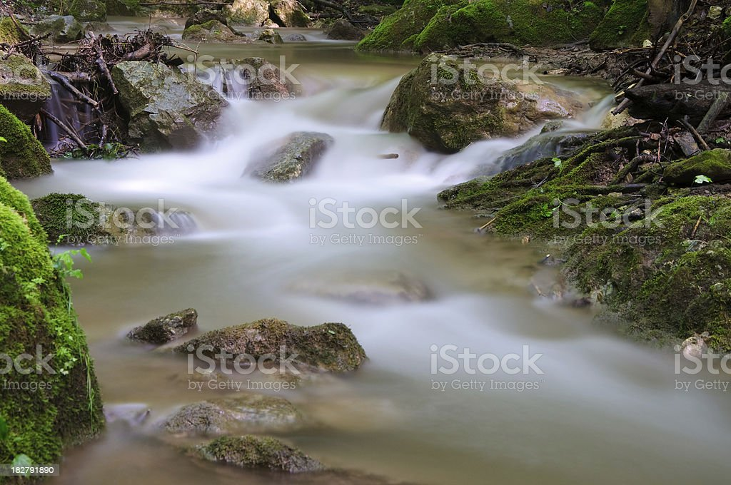 Forest River royalty-free stock photo