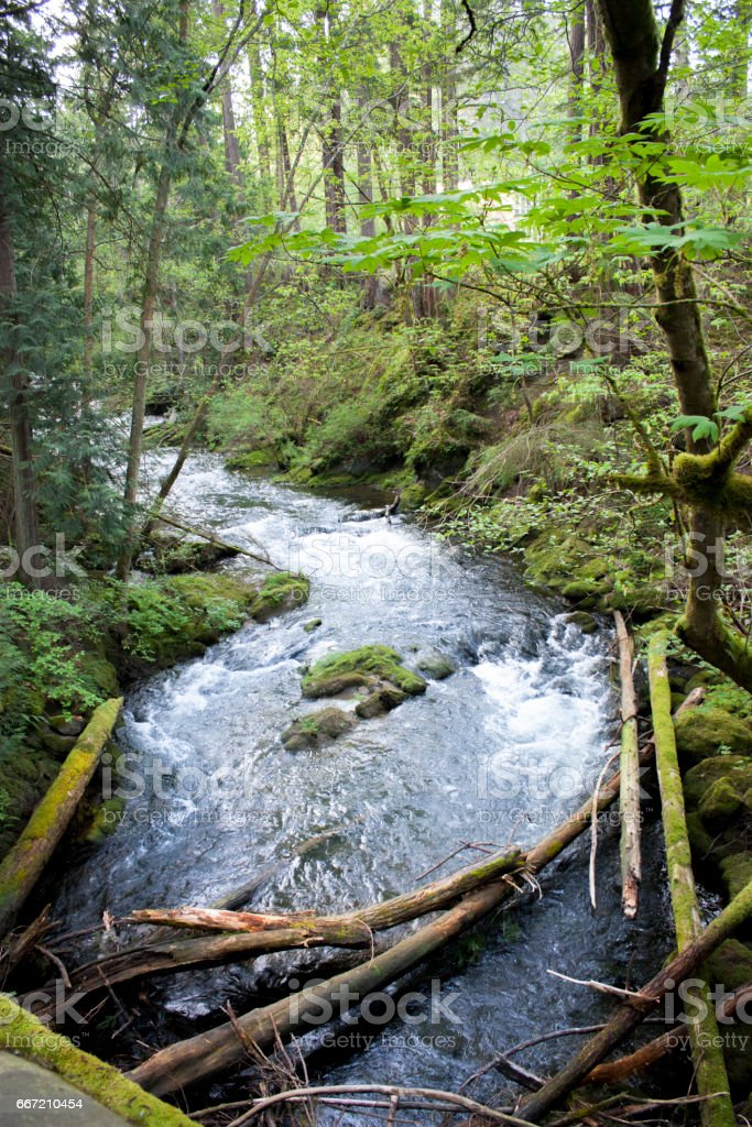 Forest River Rapids stock photo