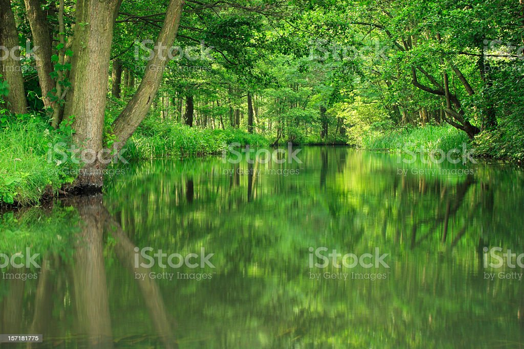 Forest River Reflections stock photo