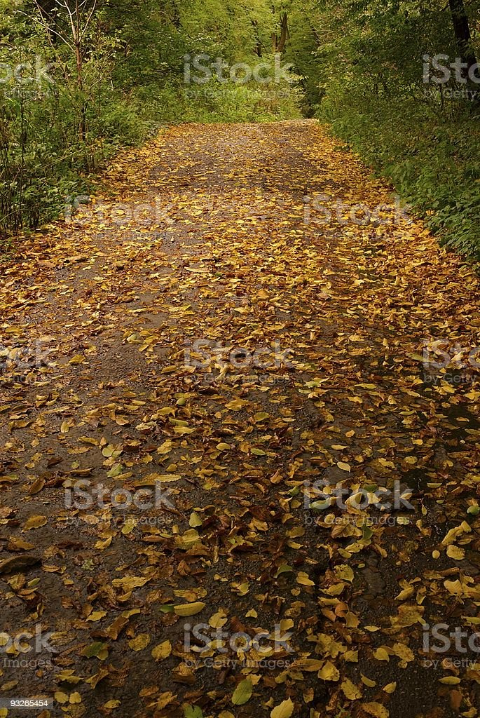 Forest road covered with leaves stock photo