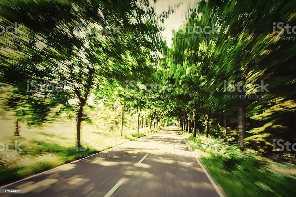 forest road driving royalty-free stock photo