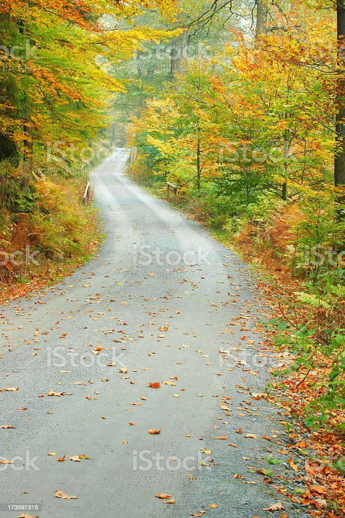 Forest Road in Autumn II royalty-free stock photo