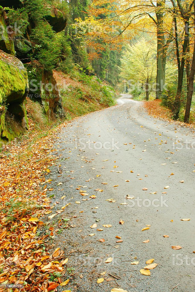 Forest Road in Autumn IV royalty-free stock photo