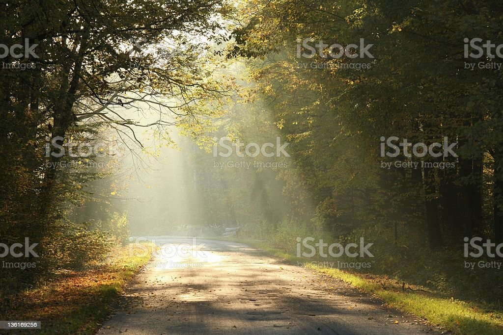 Forest road in autumn morning stock photo