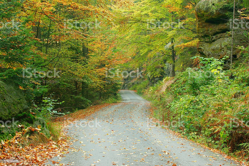 Forest Road in Autumn stock photo