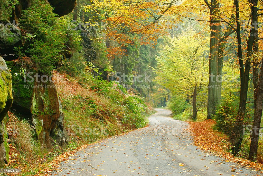 Forest Road in Autumn V royalty-free stock photo