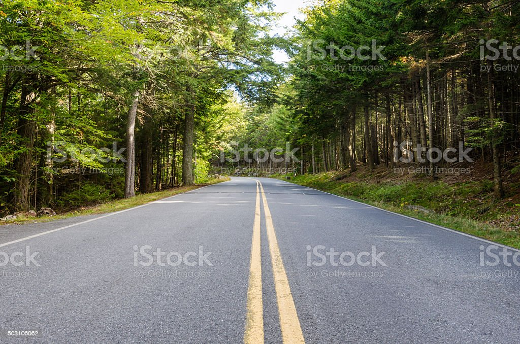 Forest Road in Early Fall stock photo