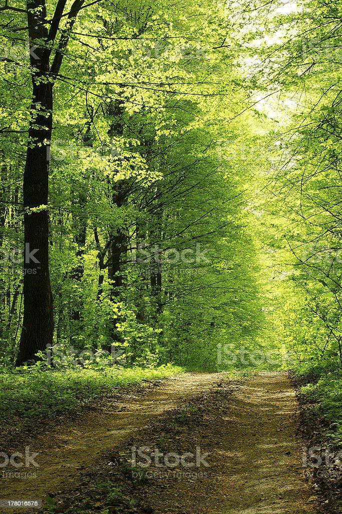 Route de forêt en journée ensoleillée photo libre de droits