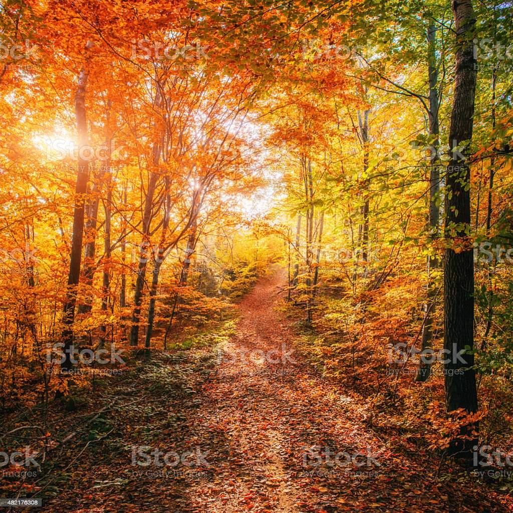 Forest Road in the autumn. Autumn Landscape. stock photo