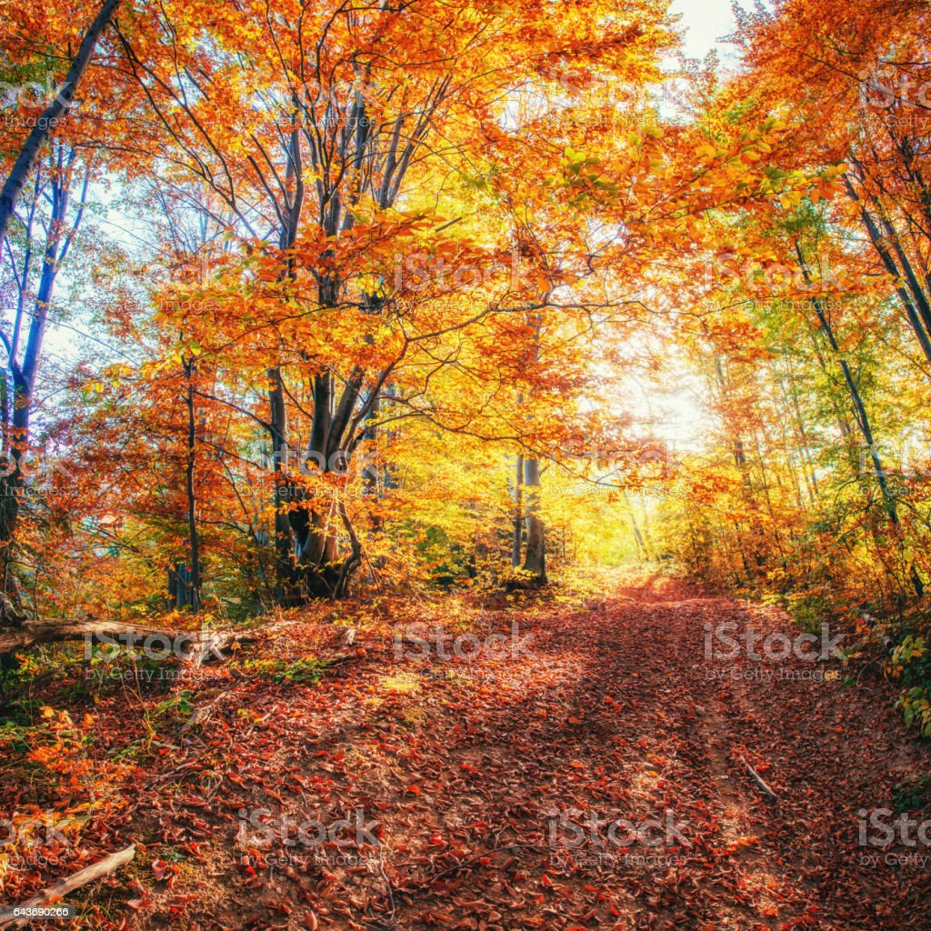 Forest Road in the autumn. Landscape. Ukraine. Europe stock photo