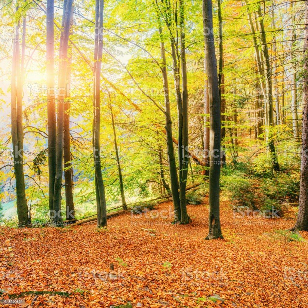 Forest Road in the autumn. Landscape. Ukraine. Europe stock photo