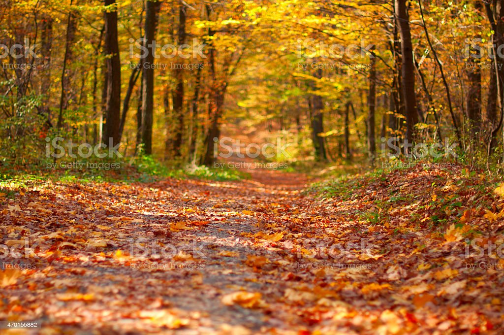 Forest road in the fall with leaves on the ground stock photo