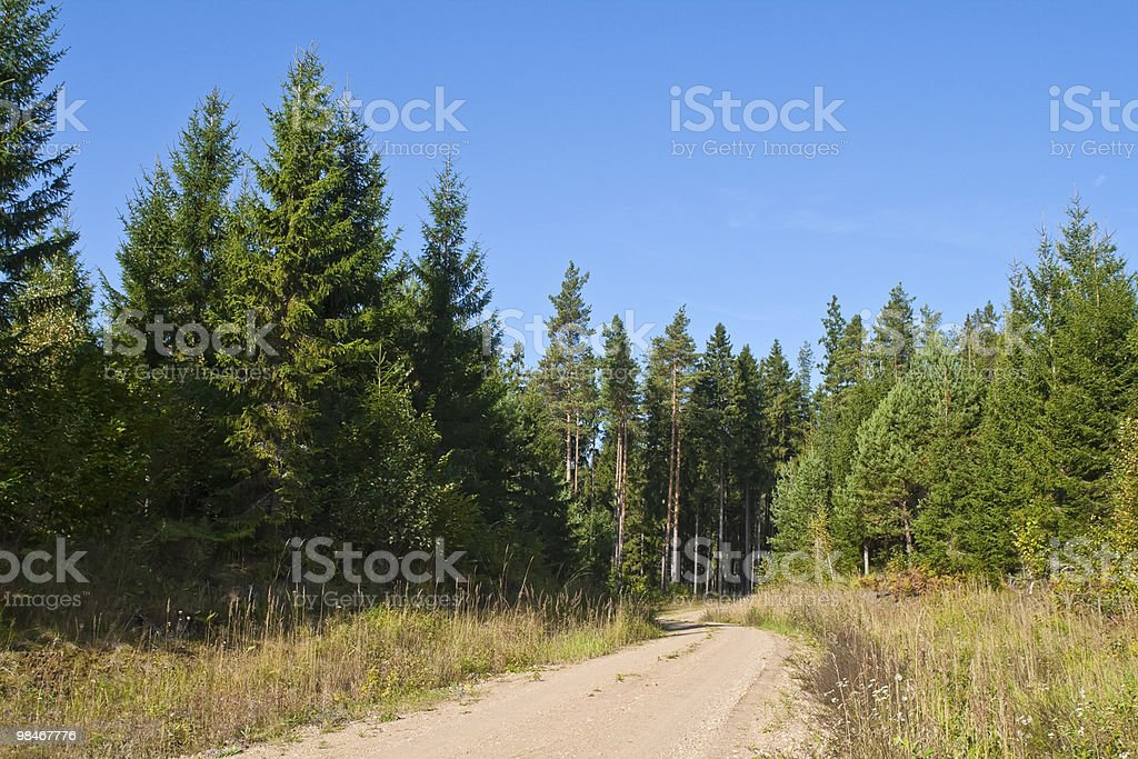 Forest Road in the summer stock photo