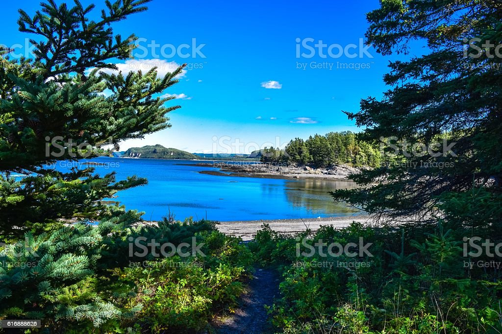 Forest road leading to the river royalty-free stock photo