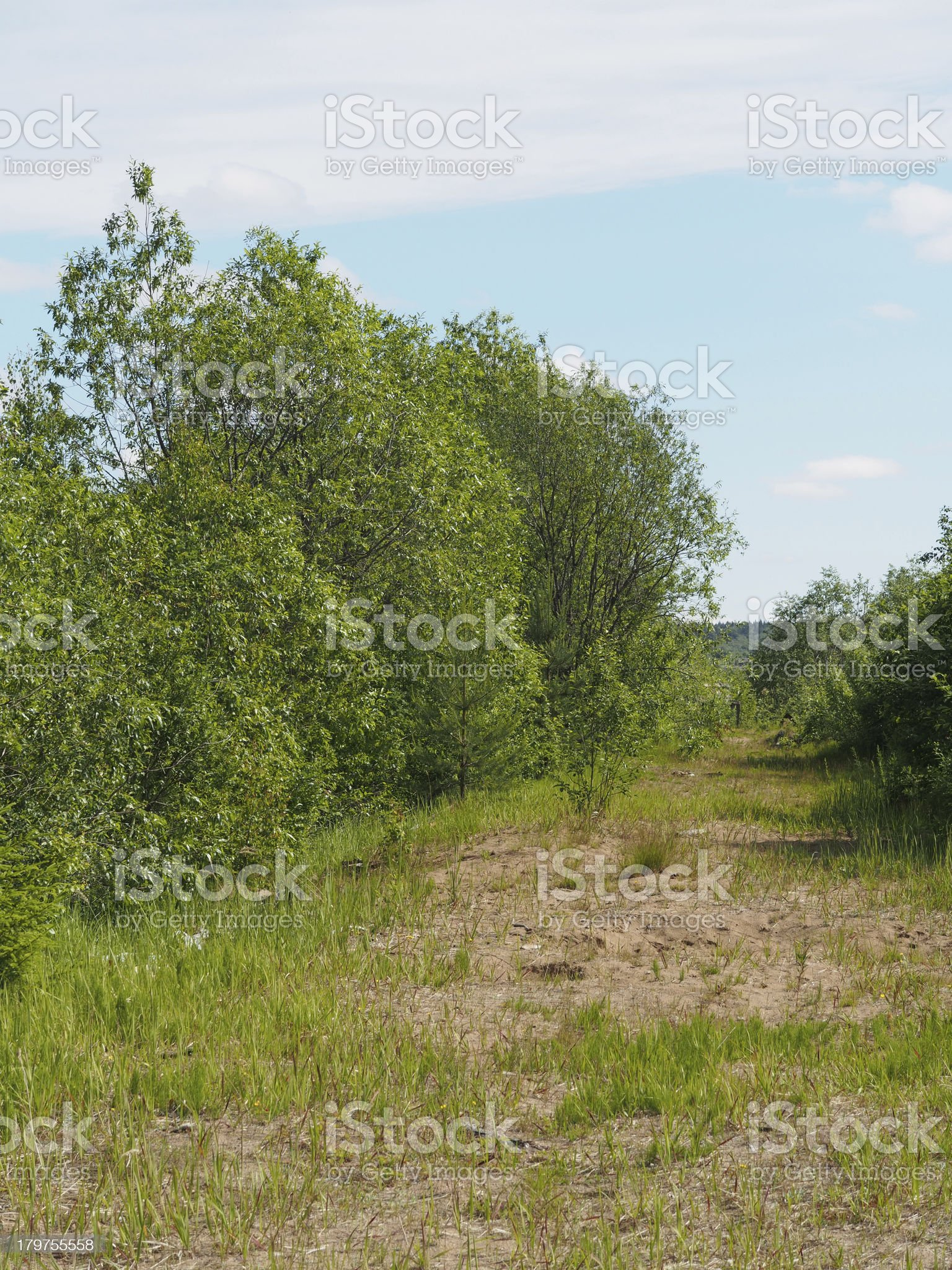 forest road royalty-free stock photo