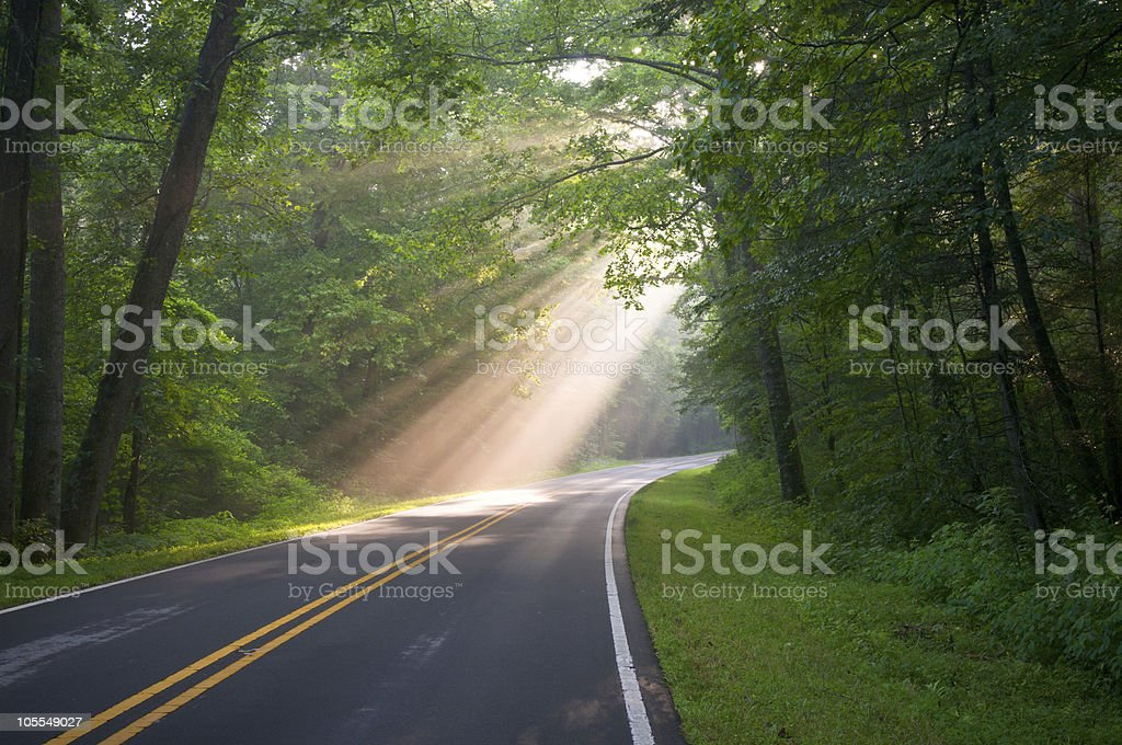Forest Road Sun Beams and Rays Through Trees stock photo
