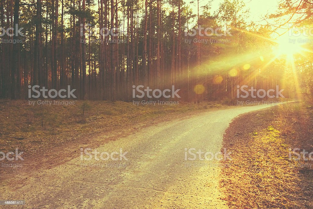 Forest road sunset sunbeams stock photo