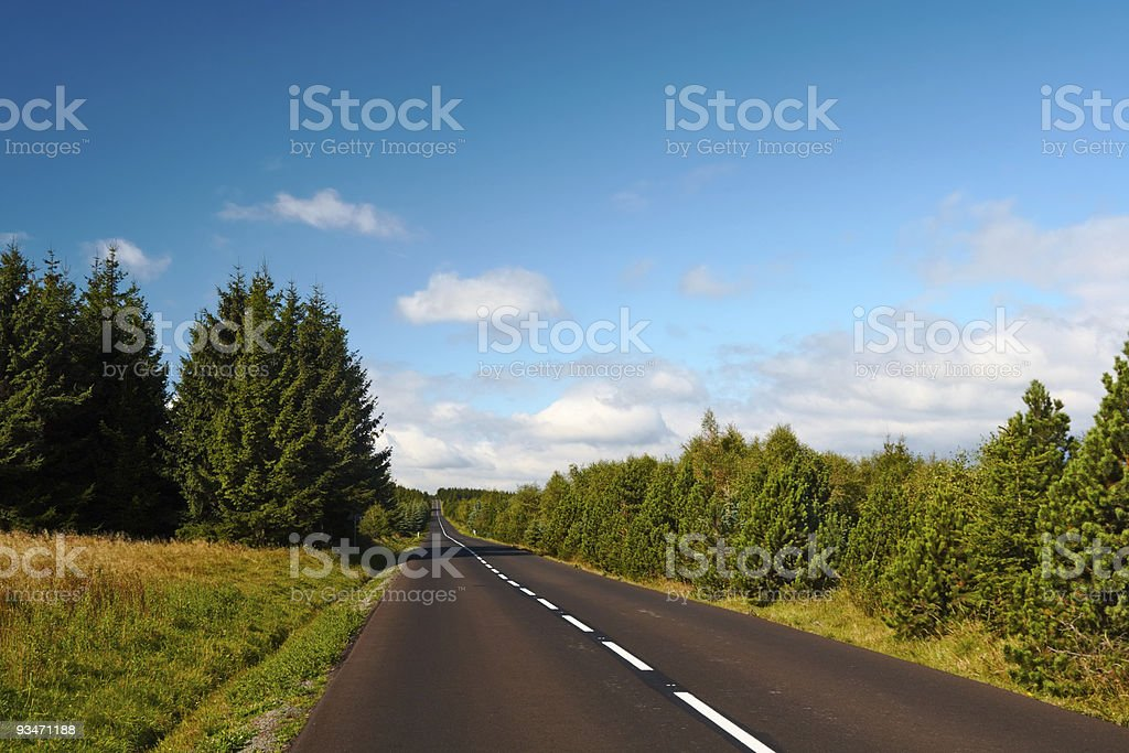 forest road to nowhere royalty-free stock photo