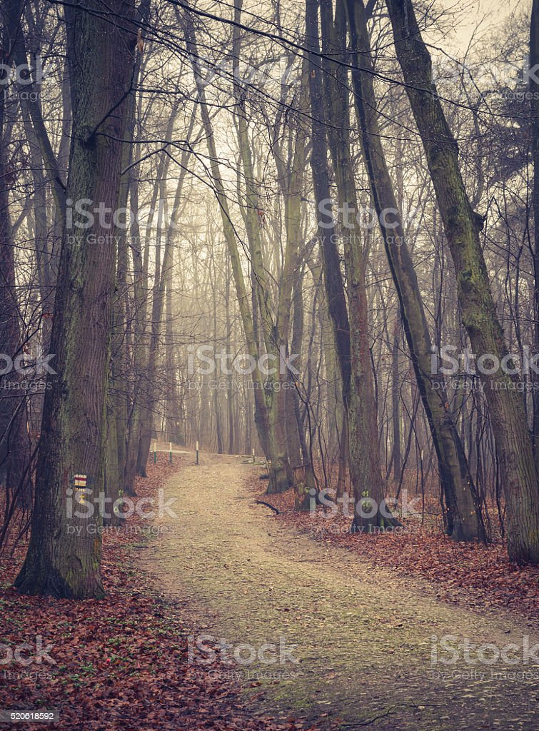 Forest road with dark trees on foggy late autumn day stock photo