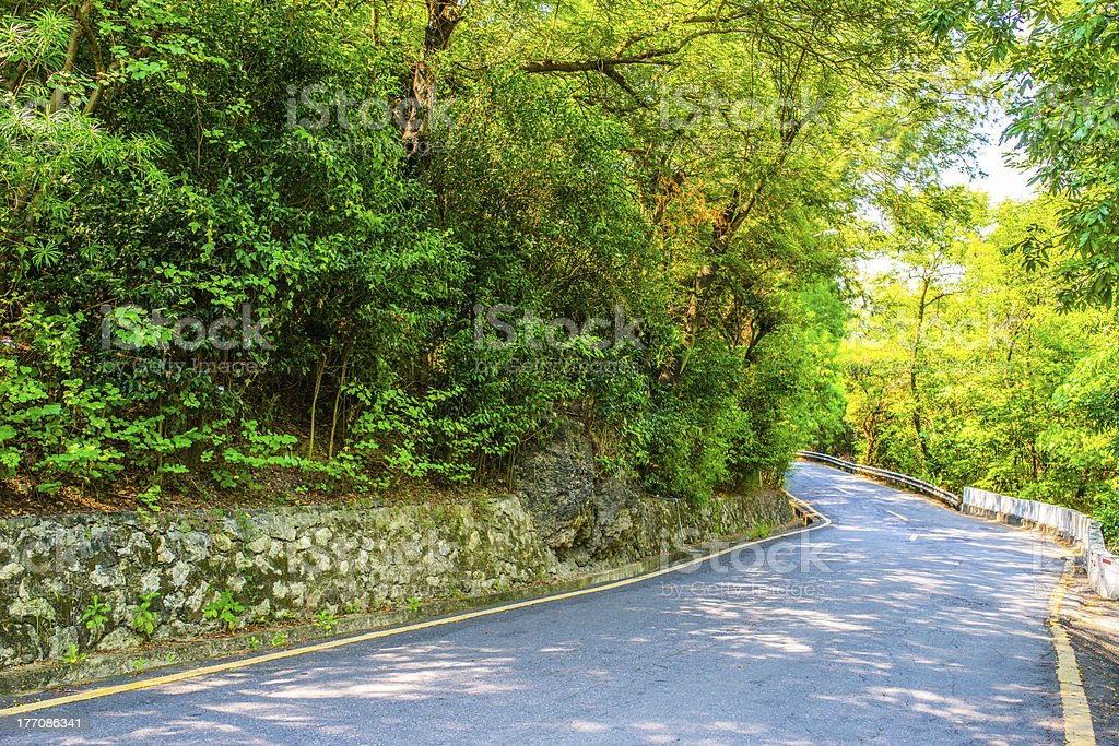 Forest roads royalty-free stock photo