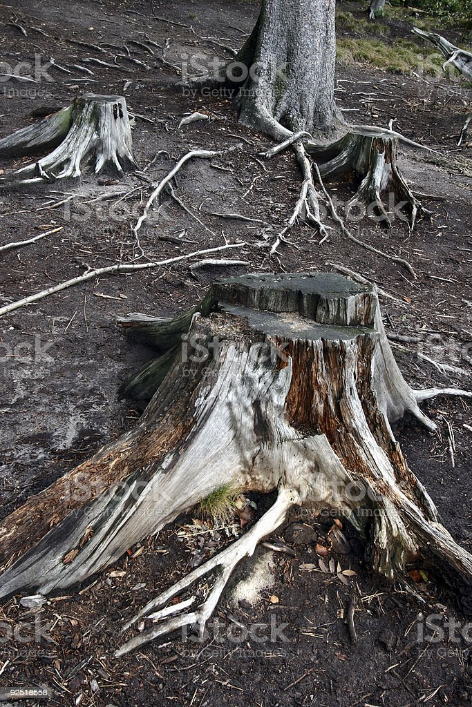 forest roots2 royalty-free stock photo
