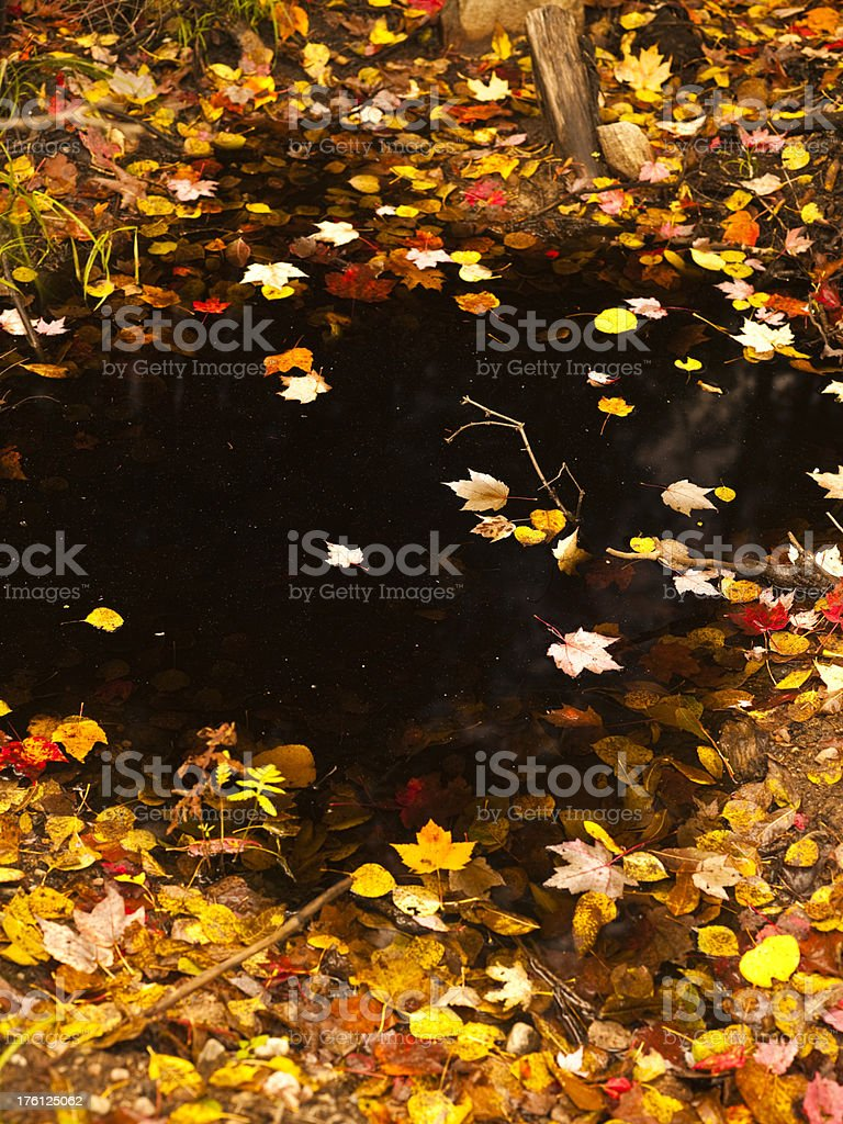 Forest rural trees on a pond in autumn royalty-free stock photo