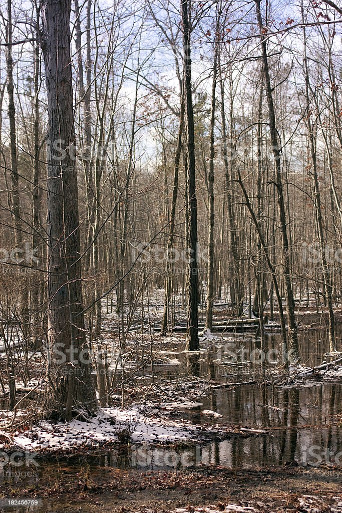 Forest Scence with snow and leaves on the ground - stock photo