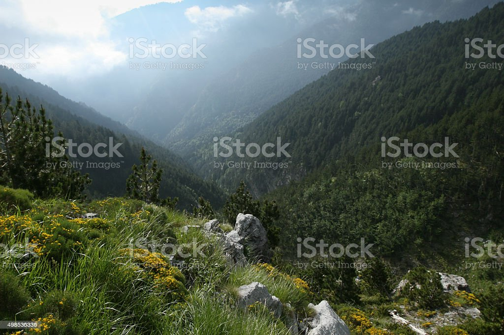 Forest scene  in Olympus mountain-Greece stock photo
