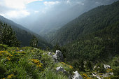 Forest scene  in Olympus mountain-Greece