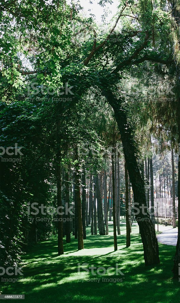 forest scene, outdoor photo beauty in nature stock photo