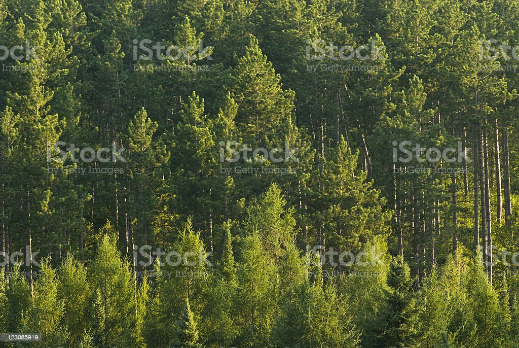 Forest Scene stock photo
