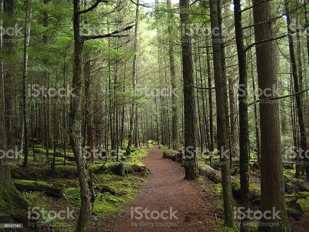 Forest Scenery3 stock photo