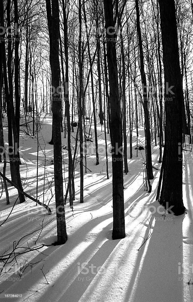 Forest shadows on snow royalty-free stock photo