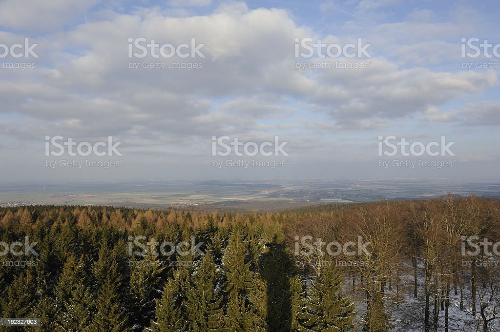 Forest shadows royalty-free stock photo