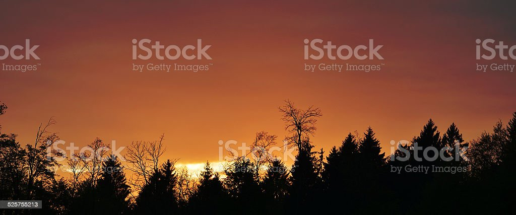 Forest silhouette stock photo
