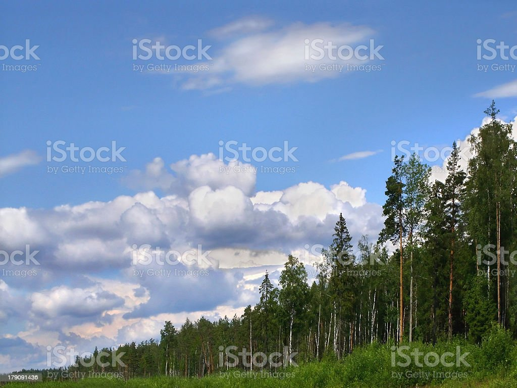 forest skyline royalty-free stock photo