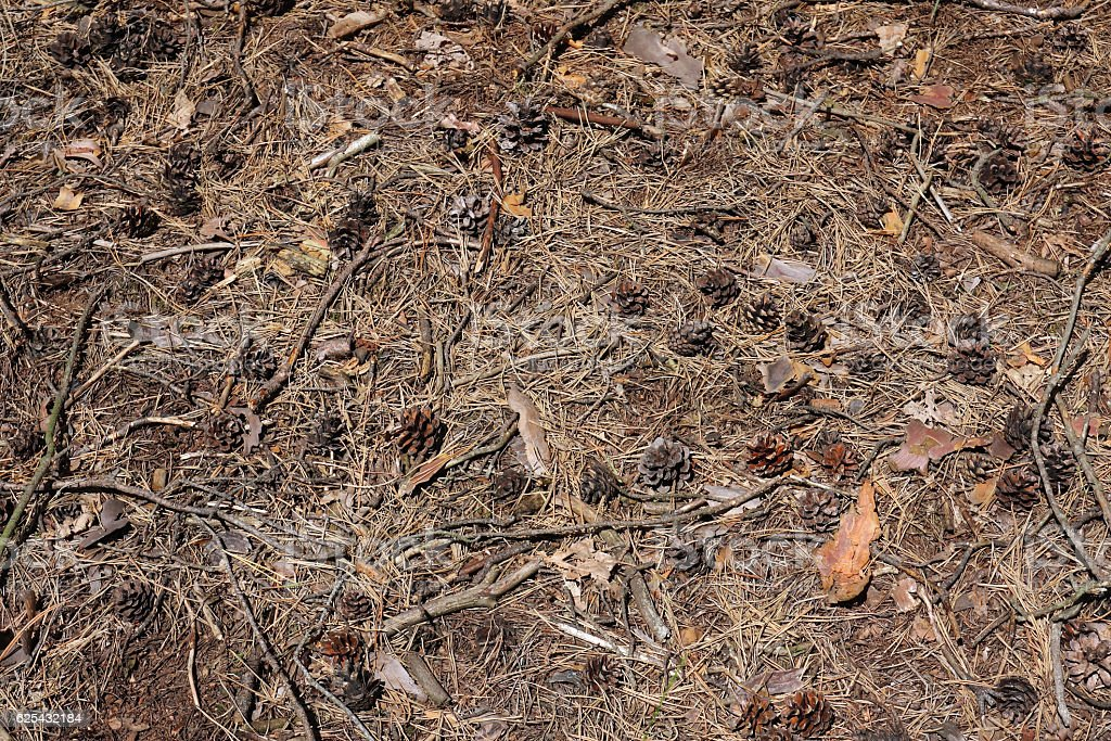 Forest soil stock photo