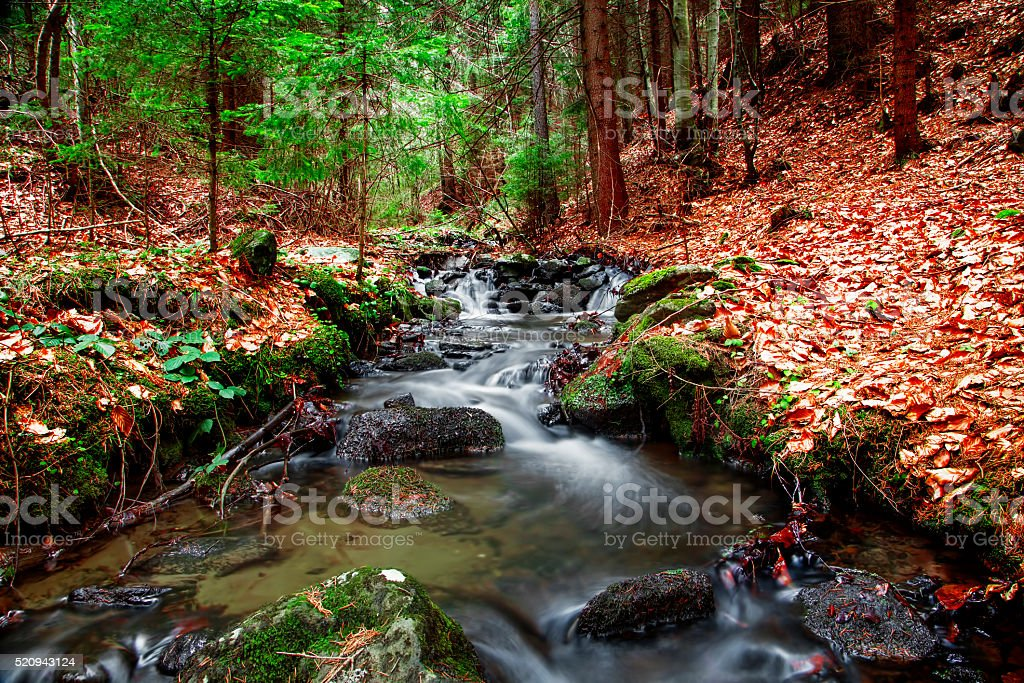Forest spring in seasons transition stock photo